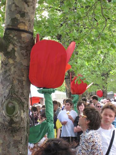 Tulipes géantes