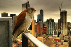 urban raptor - by mugley