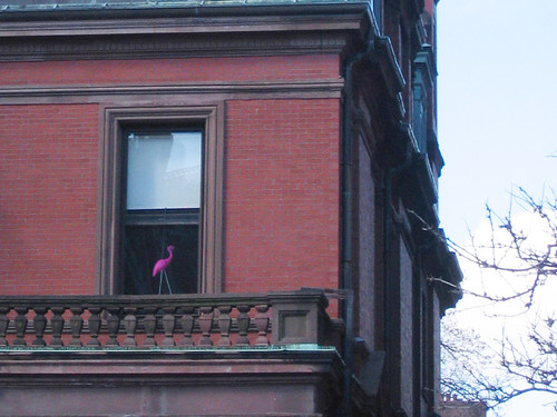 dartmouth street's pink flamingo