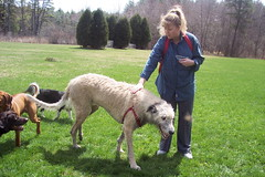 BIG DOG! (Gaia43) Tags: dog irishwolfhound