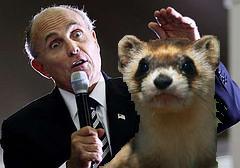 Rudy Giuliani Ferret