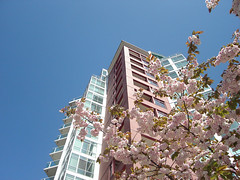 Pink Tree and Residential Building (Ophidiann) Tags: sunny northvancouver vancouverbc blossomingtree incity residentialbuilding