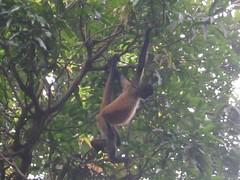 zoo aves 21