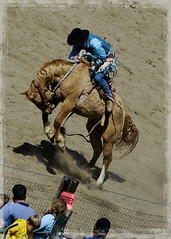marry me? (von Giltzow photography) Tags: horse cowboy idaho rodeo bronco saddle riggins