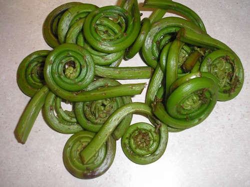 fiddlehead ferns, the unfurled leaves of the ostrich fern are edible if cooked. Bitter if eaten raw