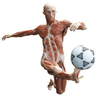 Body Worlds Soccer Player