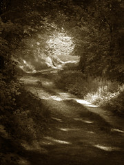 Lane.Above - soul hour sepia hourofthesoul nature clouds lane lights peoplechoice scoremefast rights walk
