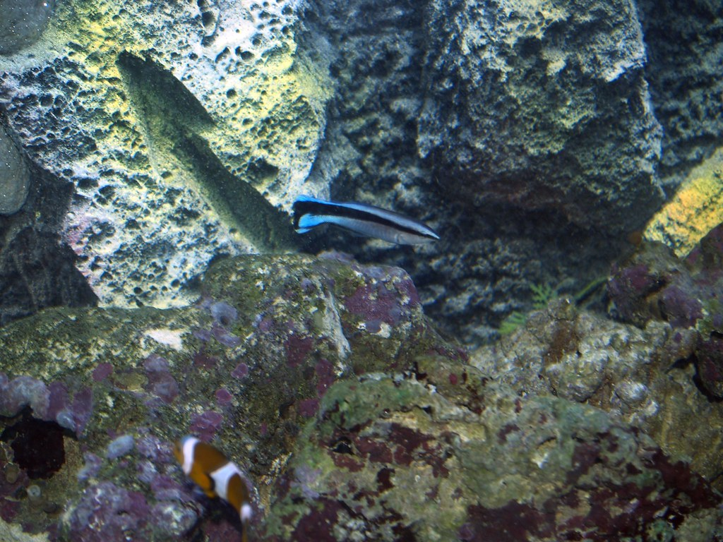 Some aquarium Inhabitants 06