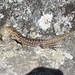 Awesome Gecko