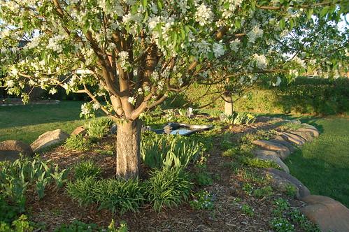 Front garden...