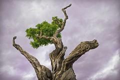 Schloss-Koblenz (zane) Tags: tree canon arbre baum koblenz coblence 350dnd400
