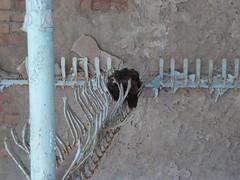 Hat left on hanger in Prypiat school (mikestuartwood) Tags: school hat europe power radiation nuclear ukraine radioactive powerplant hanger easterneurope nuclearpower chernobyl alienation chornobyl prypiat prypjat pripjat