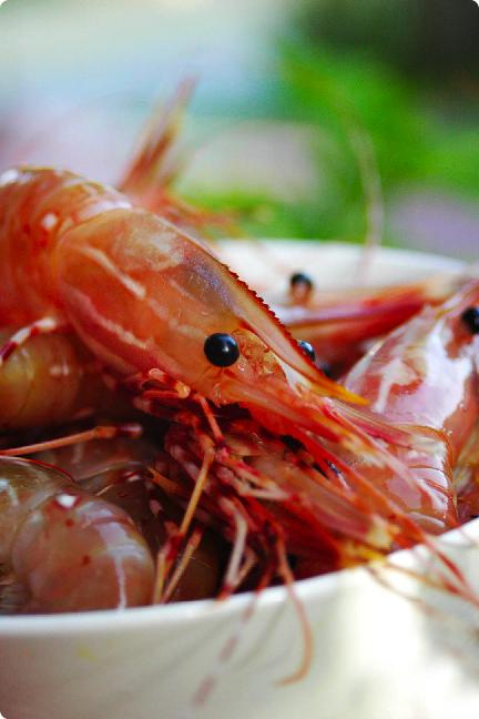 spot prawn head