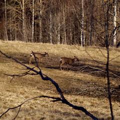 (Per Lissel) Tags: nature landscape sweden deer sverige 50200mm dalarna roedeer zd pjl lvsen