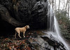 Still got it (csnyder103) Tags: happy pisgah waterfall dog pittie rescue winter wideangle littleadventure canoneos6d canonef1124