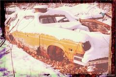 161123-24 Chevrolet Vega (clamato39) Tags: carwreck carcemetery cargraveyard cimetièredautos oldcars auto ancient old stamable provincedequébec québec canada