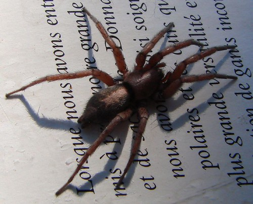 "spider • <a style=""font-size:0.8em;"" href=""http://www.flickr.com/photos/10528393@N00/443822032/"" target=""_blank"">View on Flickr</a>"
