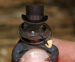 Sophisticated Spotted Salamander (Improved Version) (The Horned Jack Lizard) Tags: amphibian salamander spottedsalamander ambystoma improvedversion ambystomamaculatum