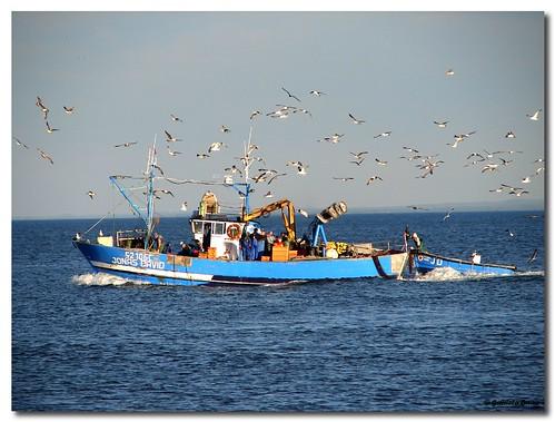 Barco voltando carregadinho de peixe...
