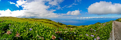 Hortensia and Sao Jorge Island - by Ulrich Thumult