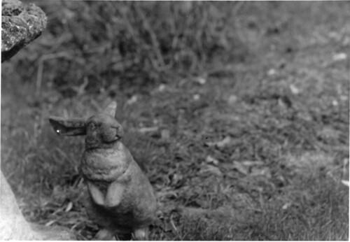willon-rabbit