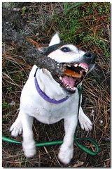 one's bark is worse than one's bite