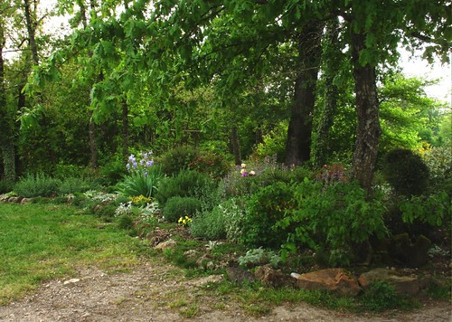 Can I Garden Under Live Oak Woodland Forum At Permies