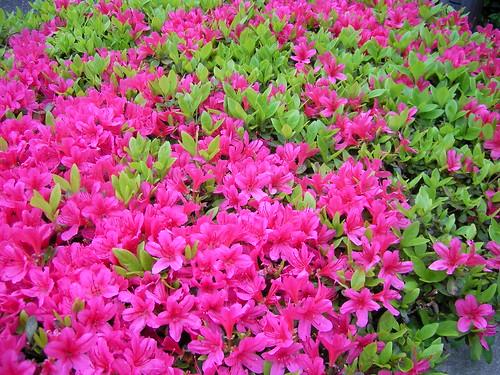 たくさんの花はきれいだけど、たくさんの施設の子は?