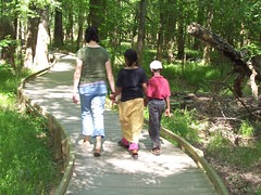 walking in congaree national park
