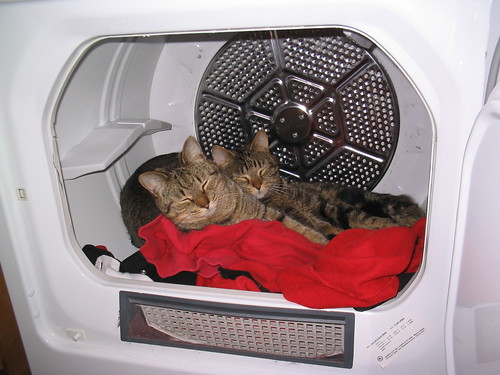 Kittens in the Laundry