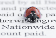 Nationwide (Rich Baker) Tags: macro application ladybird ladybug nationwide mortgage boredtodeath abigfave
