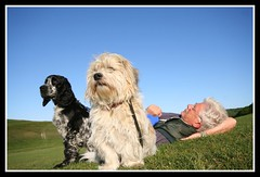 One man and his dogs (Linda Cronin) Tags: blue sky max dogs grass interestingness explore resting thumbsup gromit animalkingdomelite challengeyouwinner 3waychallengewinner colorphotoaward aplusphoto goldenphotographer flickrchallengewinner faceoffwinner challengeyougroupwinner 15challengeswinner lindacronin tribehorizon motifdchallengegroupwinner photofaceoffwinner faceoffsilver likeitornotwinner a3b friendlychallenges thumbsupwinner pregamewinner