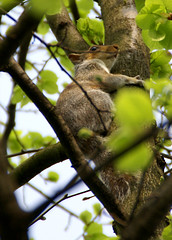 urgently need a hug (vonSutzsche) Tags: park fauna hug hyde need squirel urgently labirynt