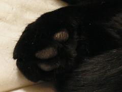 Belle paw closeup