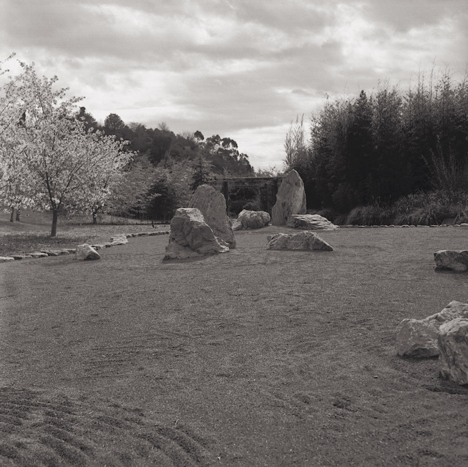 Zen Garden & Sakura