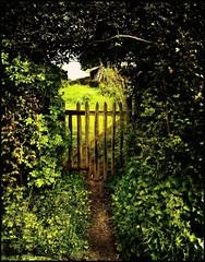 it'll be our secret (jody9) Tags: england film mediumformat garden bravo gate springtime dreamscape pentax6x7 naturesfinest splendiferous magicdonkey outstandingshots picturethecure2008