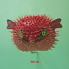 Day 22 (steffanmacmillan) Tags: bigeyes foresthill redfish pufferfish honoroak stuffedfish hornimanmuseum spikeyfish