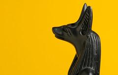 Sekhem Em Pet (Jack of Nothing) Tags: yellow statue jackal god egypt mummy funerary basalt anubis afterlife mummification ancientegyptian psychopomp stuhorvath anpu averylongyear guardianofthedead