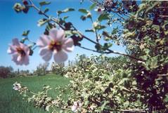 Fleurs sauvages_Milli_زهور برية_ ميلّي
