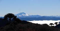 Volcn Callaqui (Mono Andes) Tags: chile mountain trekking landscape volcano backpacking andes araucaria montaa cordillera volcn chilecentral cordilleradelosandes regindelbiobo volcncallaqui