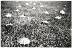 Argusbrellas (artistofmimicry) Tags: umbrellas christo argus c3 shadeforants 1thou