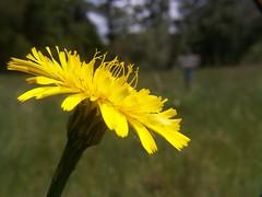 20070519 Wildflower