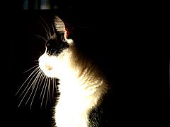 chat entre ombre et lumiere (nicouze) Tags: light shadow cat chat ombre lumiere