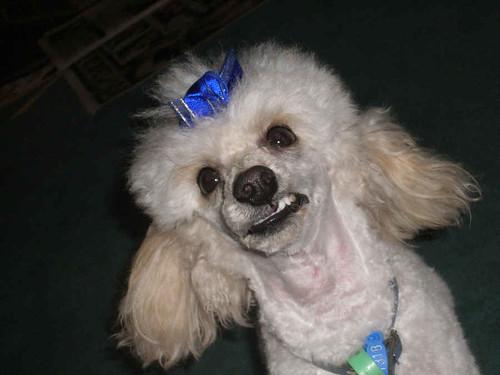 Dog Ugly Toy
