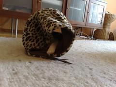 24052007123.jpg (judey) Tags: cat twinkle