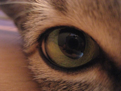 Eye of the (?)tiger