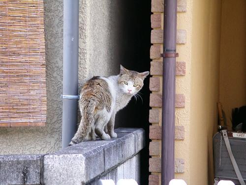 猫はいずこ