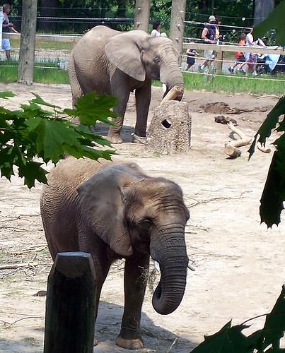 Walking By Elephants