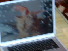 doodle's computer (bunnybunnybunnybunny) Tags: powerbook doodle beanie mackintosh