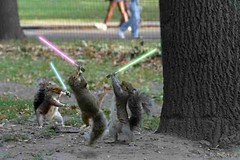 'those' jedi squirrels